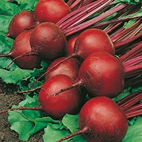 Beetroot Red Ace F1 Seeds