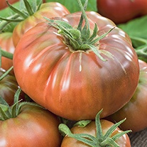 Tomato (Heritage) Black Russian Seeds