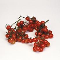 Tomato (Heritage) Christmas Grapes Seeds