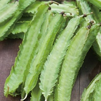 Asparagus Pea Seeds