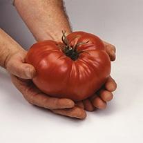 Tomato (Heritage) Pink Brandywine Seeds