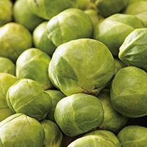 Brussels Sprout Maximus F1 AGM Seeds