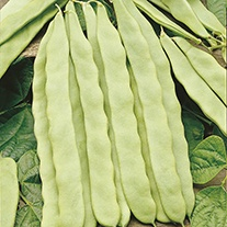 French Bean (Climbing) Hunter AGM Seeds