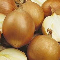 Onion (Globe) Santero F1 Seeds