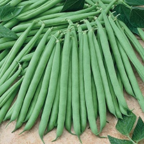 French Bean (Dwarf) Primavera Seeds