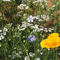 Mixed Annuals Fruit Tree Protection Flower Seeds