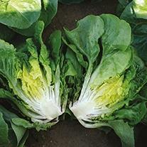 Lettuce Sweetheart Seeds