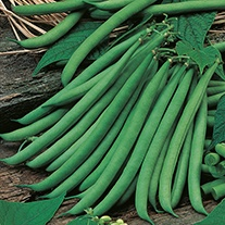 French Bean (Dwarf) Ferrari Seeds