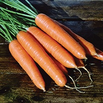 Carrot Eskimo F1 AGM Seeds