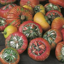 Squash (Winter) Turks Turban Seeds