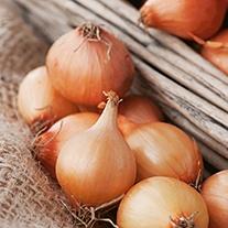 Onion (Globe) Vento F1 Seeds