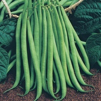Dwarf French Bean Delinel AGM Seeds