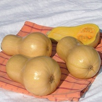 Squash (Butternut) Hunter F1 AGM Seeds