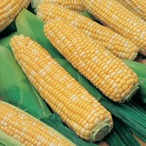 Sweetcorn Ambrosia Seeds