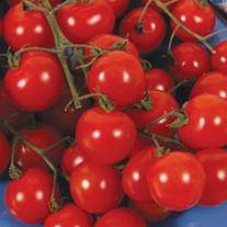 Tomato Sweet Aperitif (Cherry)