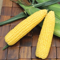 Sweetcorn ACX SS7403RY (Early) Seeds