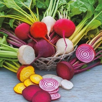 Beetroot Multi-coloured Mixed Veg Seeds