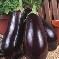 Organic Aubergine Black Beauty Seeds