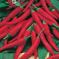 Pepper (Chilli) Joe's Long Cayenne Seeds