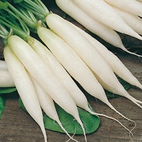 Radish Long White Icicle Seeds