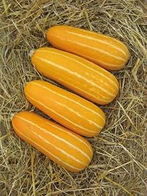 Marrow Honeygold F1 Veg Seeds