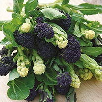 Broccoli Lancer Mixed Veg Seeds