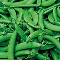 Pea Nairobi Veg Seeds