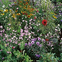 Native Wildlife Flower Seed Mix