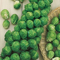 Brussels Sprout Agincourt F1 Veg Seeds