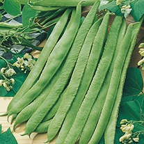 Runner Bean White Swan Veg Seeds