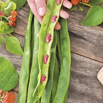 Runner Bean Guinness Record