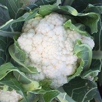 Cauliflower Orkney F1