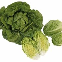 Lettuce Tantan