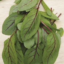 Sorrel Red Veined
