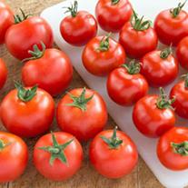 Tomato Gardening Delight F1