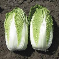 Chinese Cabbage Kiseki F1 Seeds
