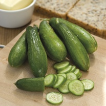 Cucumber Mini Munch F1 Seeds