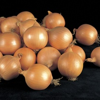 Onion Fasto F1 Vegetable Seeds