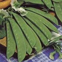Mangetout Sweet Sahara
