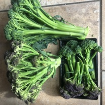 Broccoli Purple Rain F1 Seeds