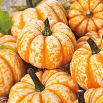 Pumpkin Blaze F1 Seeds