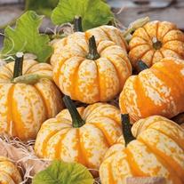 Pumpkin Blaze F1 Veg Seeds