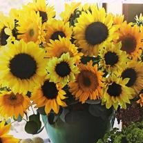 Sunflower Cutflower Mix