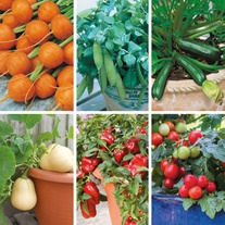 Pots and Containers Vegetable Seed Collection