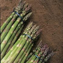 Asparagus Gijnlim