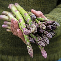 Asparagus Majestic Crowns