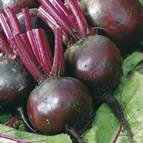 Beetroot Moneta Vegetable Plants