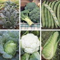 Kitchen Garden Brassica Collection