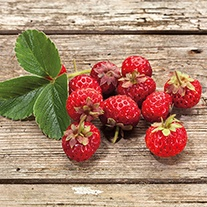 Framberry Fruit Plant