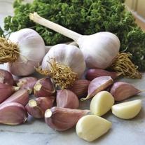 Garlic Topinky Wight Bulbs (hardneck)